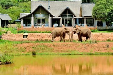 2 Day Askari Lodge Safari