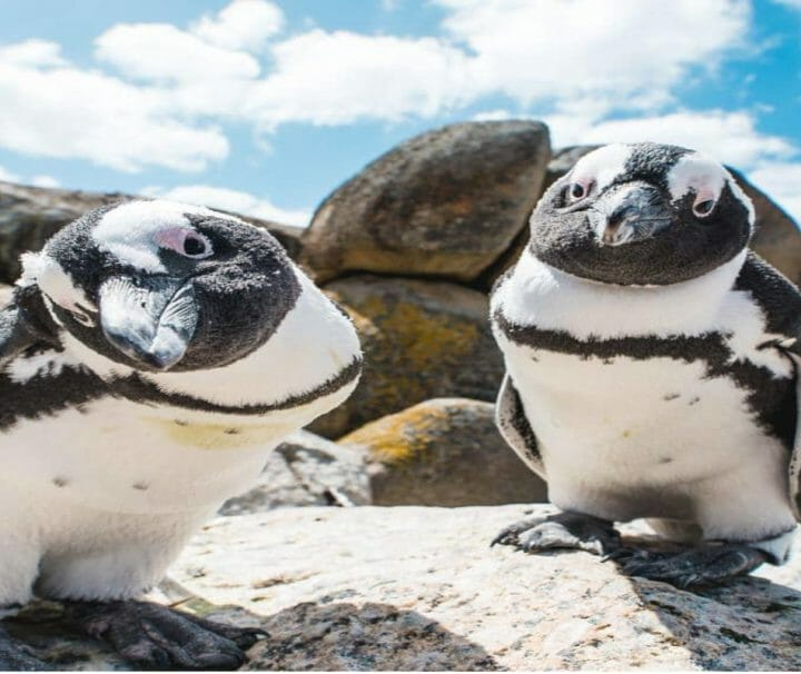half-day-cape-of-good-hope-and-penguins-tour